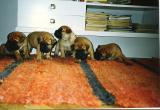 the first Bd-litter